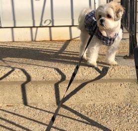 Betsy's Walking Partner